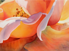 Цветы в солнечных акварелях Марни Вард