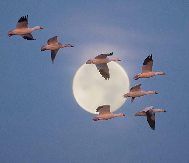 Красивые фотографии животных и птиц